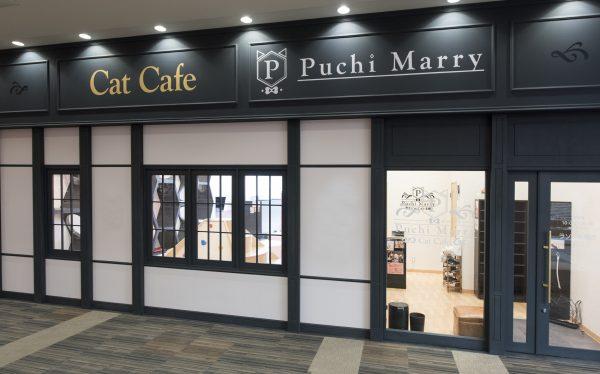 猫カフェ Puchi Marry